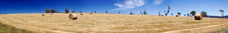 File:Field of hay bales - omeo.jpg