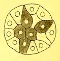 Figure 6 (Méchnikov).png