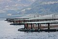 Fish farming off the coast of Skye 1.jpg