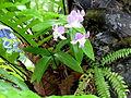 Fleurs de Thailande 2.jpg