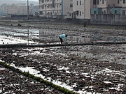 Paddy field prior to planting, in Taiwan