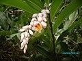 Flor da Floresta.jpg