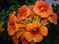 Flor de ? (275667956).jpg