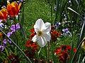 Flores en primavera en Versalles - panoramio.jpg
