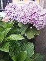 Flower20180527 184605.jpg