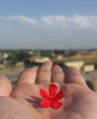 Flower On Palm.png