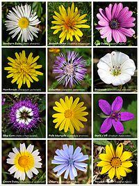 Flower poster.jpg