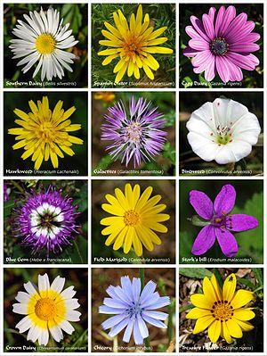 English: A flower poster. Esperanto: Flora afi...