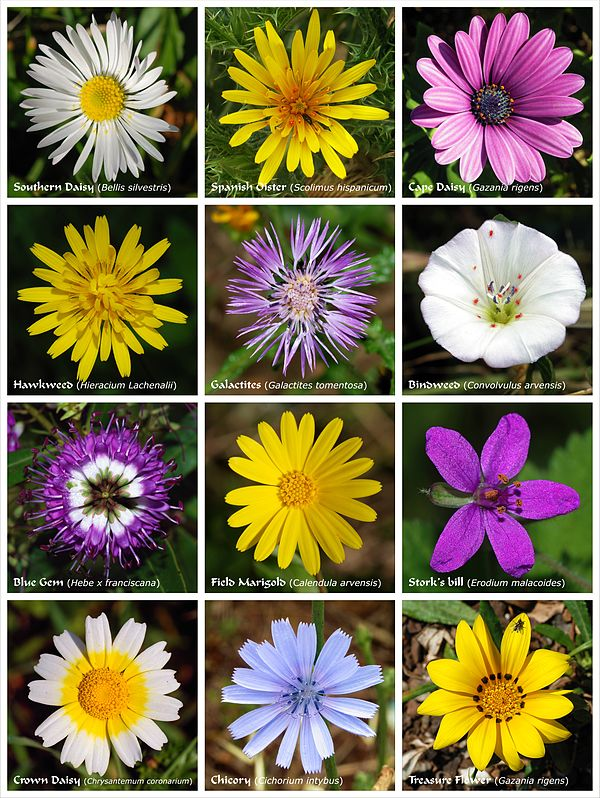 external image 600px-Flower_poster.jpg
