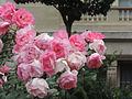 Flowers in France.jpg