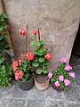 Flowers of Ecuador, Historic Center of Quito, pic.a.5.5.jpg
