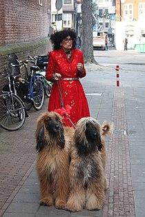 Fong Leng Dogs.JPG
