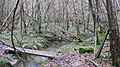 Footbridge in Whitter's Copse - geograph.org.uk - 1615103.jpg