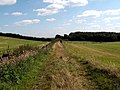 Footpath to Deffer Wood - geograph.org.uk - 545838.jpg