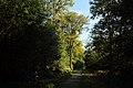Forêt de Stambruges 03.jpg