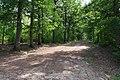 Forêt domaniale de Bois-d'Arcy 18.jpg