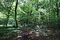 Forest @ Roc de Chère @ Talloires (35258931280).jpg