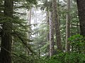 Forest In Makah Indian Reservation (193306545).jpeg