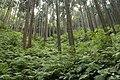 Forest in Mt.Kesoku 05.jpg