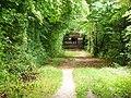 Forest path - geo.hlipp.de - 41306.jpg