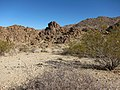 Forty Nine Palm Oasis Trail - panoramio.jpg