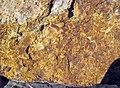Fossiliferous sandstone (Vinton Member, Logan Formation, Lower Mississippian; Hanover Pit, Licking County, Ohio, USA) 9 (33684225848).jpg