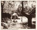 Fotografi från Korfu, Grekland - Hallwylska museet - 104581.tif