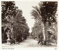Fotografi från Palermo, Italien - Hallwylska museet - 106714.tif