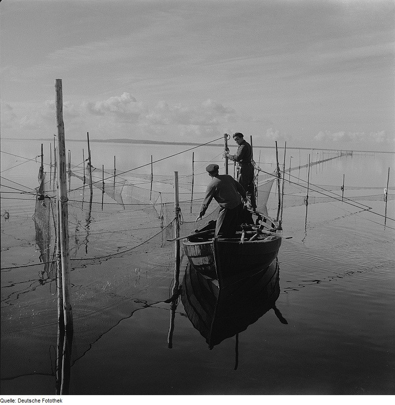 Fotothek df ps 0002295 Fischerei ^ Fischerboote ^ Fischerei ^ Fischfang