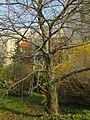 Frühlingserwachen - panoramio (2).jpg