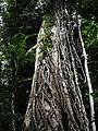 Fraser Island - panoramio (5).jpg