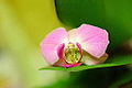 Free Pink Orchid Flower Love Creative Commons (5448087548).jpg