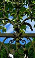 Friedhof Gresten 04 - gate detail.jpg