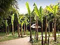 Générargues-Bambouseraie-Village laotien-8.jpg