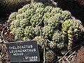 Gardenology-IMG 5257 hunt10mar.jpg