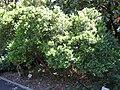 Gardenology.org-IMG 0399 rbgs10dec.jpg