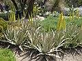 Gardenology.org-IMG 4230 hunt0904.jpg