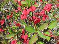 Gardenology.org-IMG 4348 hunt0904.jpg