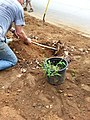 Georgia Native Plant Society planting butterfly garden in Heritage Park, Mableton, Cobb County, Sept 2015 36.jpg