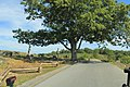 Gettysburg Battle Field Sept. 2016 LHHV Trip - panoramio - Ron Shawley (25).jpg
