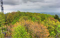 Gfp-wisconsin-rib-mountain-state-park-close-up-of-trees.jpg