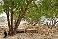Gili Trawangan - panoramio (2).jpg