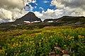 Glacier Flowers (196585475).jpeg