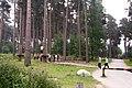 Go Ape Cannock Chase - Site 1 - panoramio.jpg