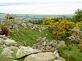 Gorse, hawthorn, rocks and a stream - geograph.org.uk - 804407.jpg