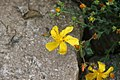"Gradina Botanica ""Vasile Fati"" (4661154384).jpg"