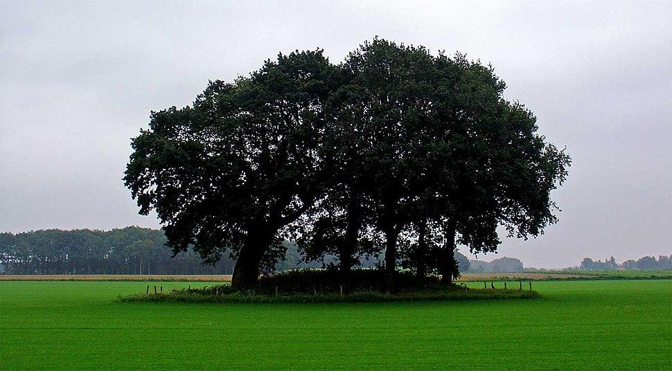 Grafheuvel tussen Borger en Drouwen