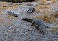 Granja de cocodrilos, Maun, Botsuana, 2018-08-01, DD 50.jpg