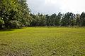 Grassland, part of Poundhill Heath - geograph.org.uk - 1442559.jpg