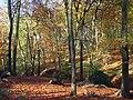 Great Wood, Hambleden - geograph.org.uk - 1050802.jpg